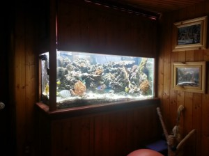 Chicago Saltwater Aquariums